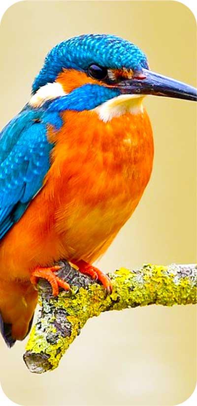 RGB形式の画像