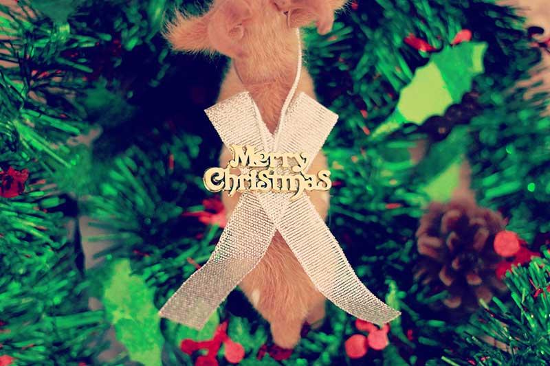 クリスマスプレゼントに最適のオリジナルグッズ!NINTENDO SWITCHオリジナルケース!グリッタースマホケース!アクリルカレンダー発売中!