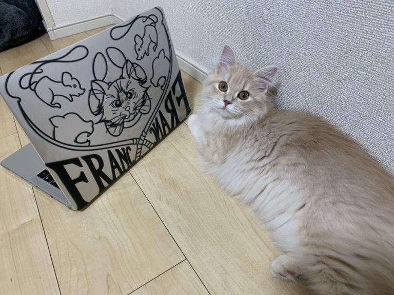 MacBookのケースのデザインを頼まれて描きました!!モデルは猫ちゃんです!!フランちゃん!モフモフでかわいー♡ネズミのおもちゃがお気に入りとのことで、そちらもイラストにいれましたー!